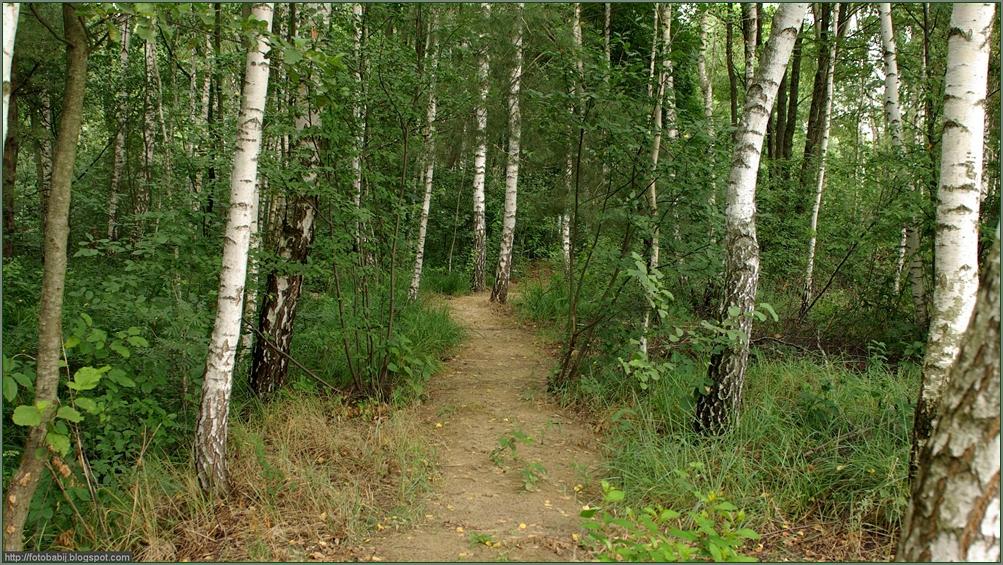 Plant gallery encyklopedia ro lin naturalistic gardens for Garden trees b q