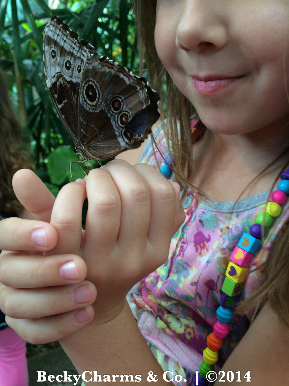 Our Trip to Butterfly Jungle at San Diego Safari Park for Spring Break 2014 by BeckyCharms