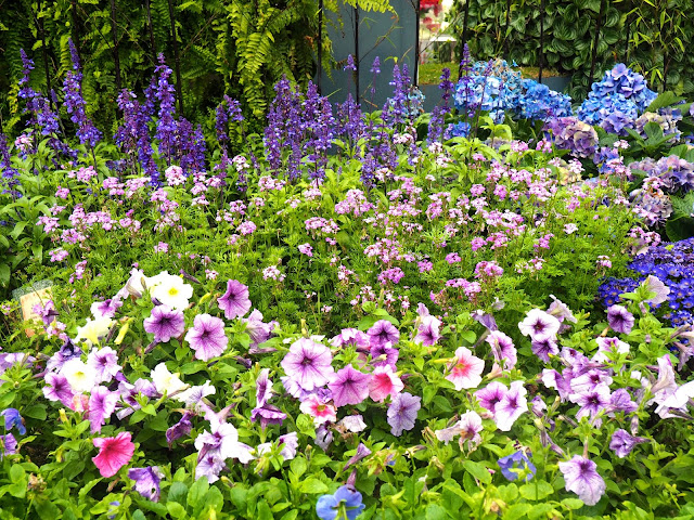 Purple flower bed at Hong Kong Flower Festival 2017