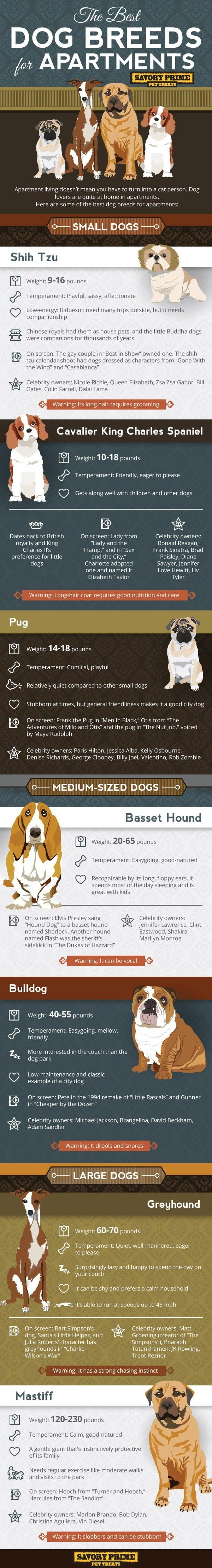 The Best Dog Breeds for Apartment Living | Savory Prime #infographic