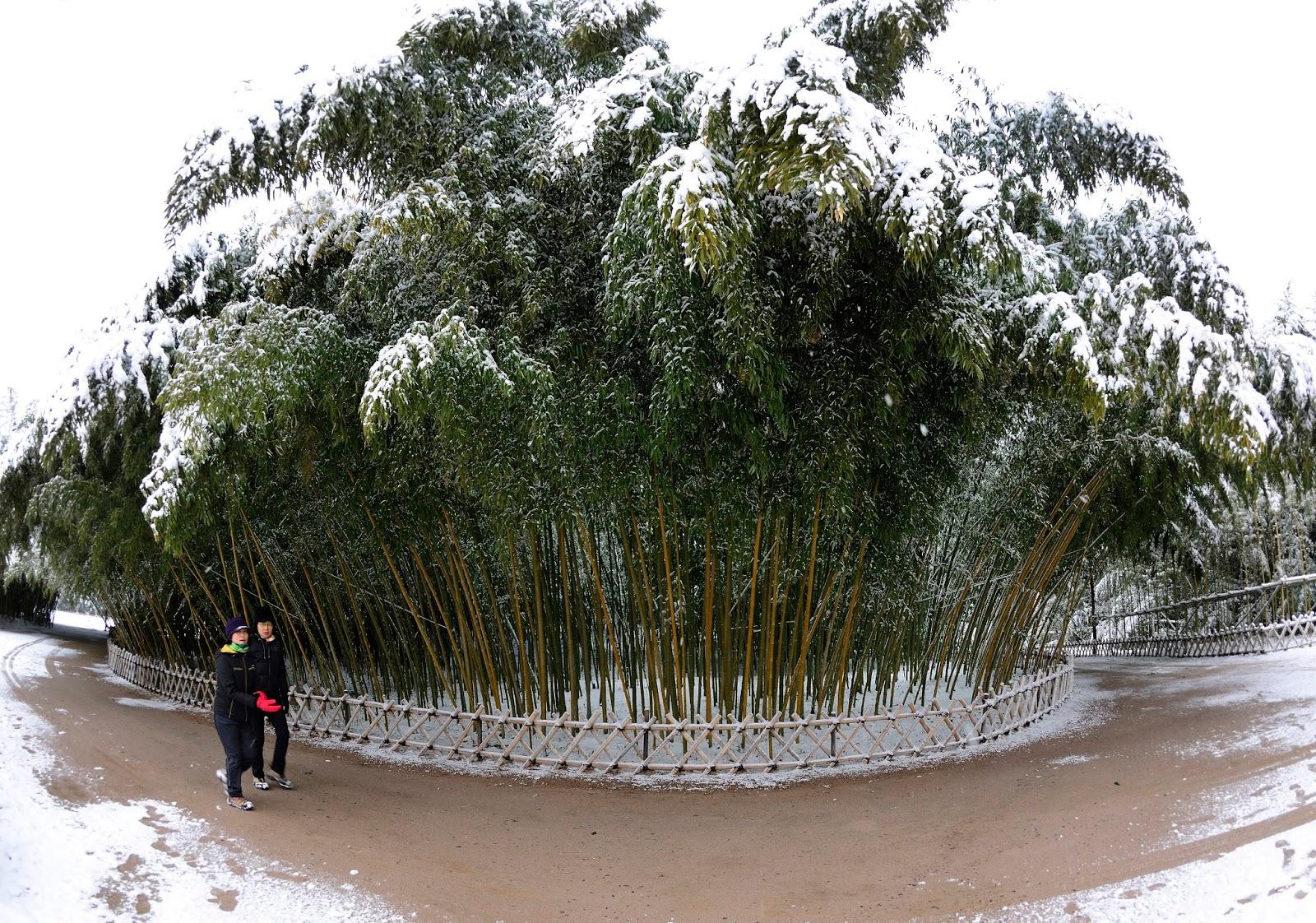 울산 십리대숲 겨울전경