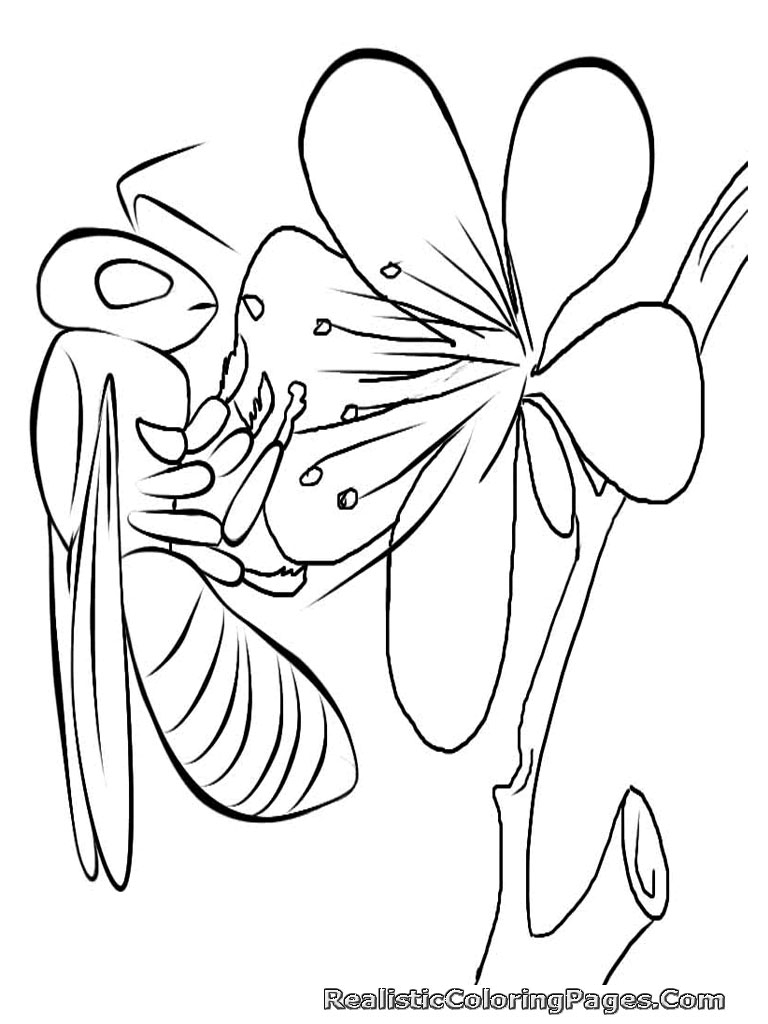 insect coloring pages please - photo#19