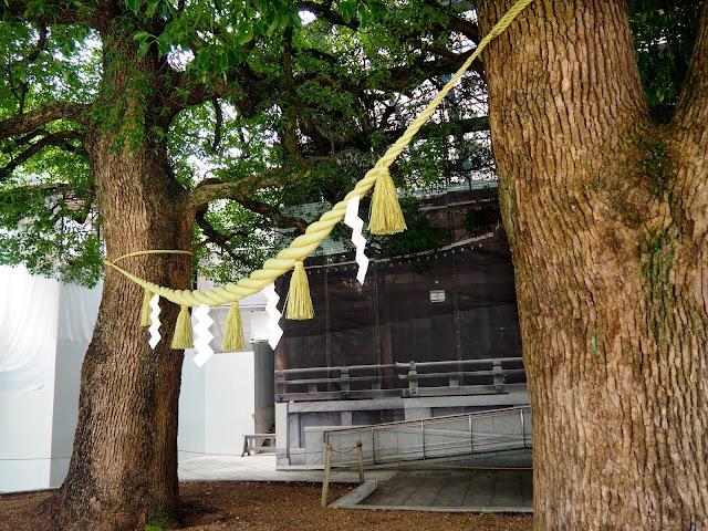 Meiji Jingu Shrine couples trees, Tokyo, Japan