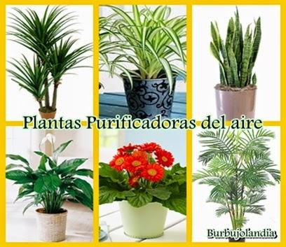 Mi mundo tu mundo plantas que purifican el aire - Plantas de interior que purifican el aire ...
