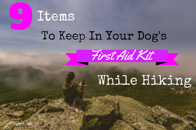 9 Items to Keep in Your Dog's First Aid Kit