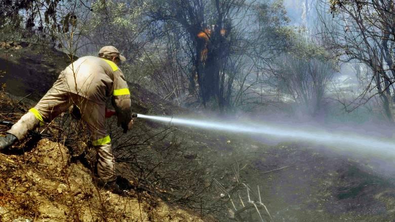 Μεγάλη πυρκαγιά στον Ωρωπό Αττικής