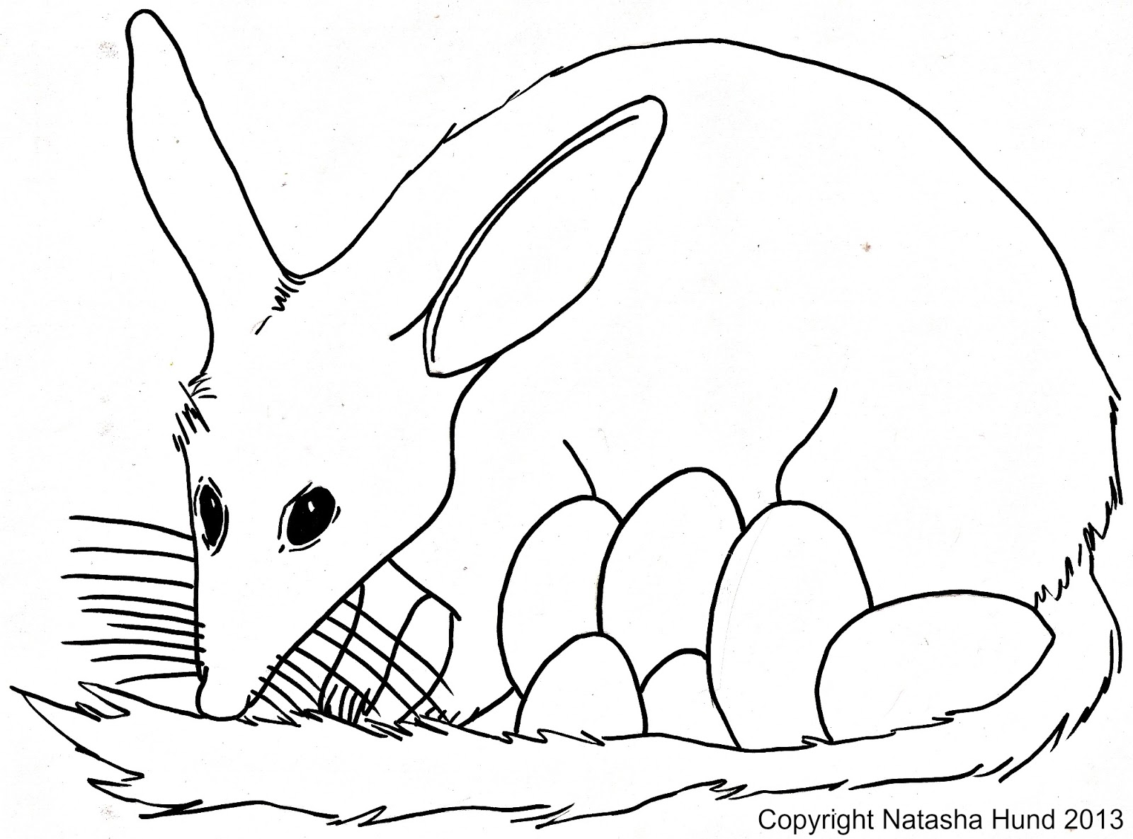 medium resolution of bilby coloring page auto electrical wiring diagram australian easter bilby