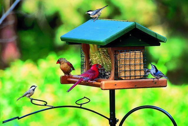 Backyard Bird Feeding Setup - A How to Guide - Nature ...