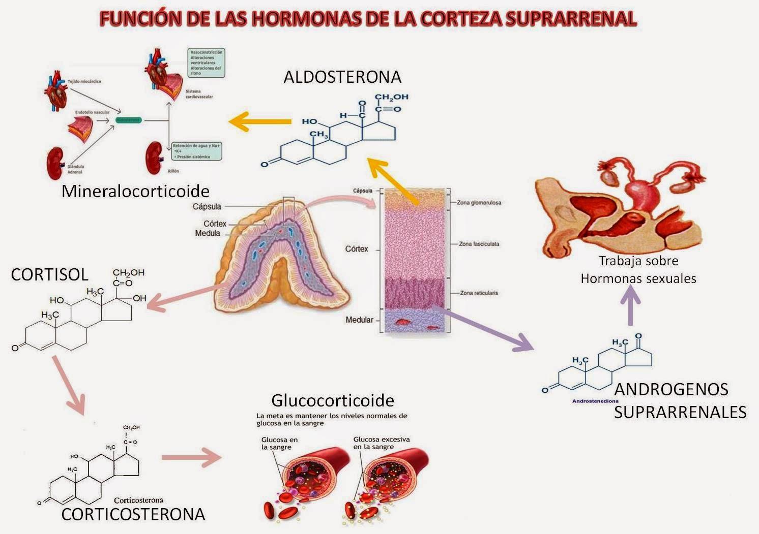 Acidosis Láctica  Wikipedia La Enciclopedia Libre