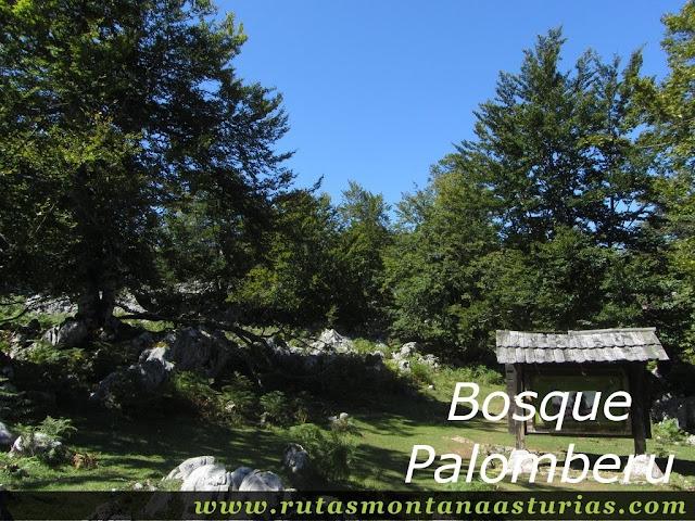 Ruta Lagos de Covadonga PR PNPE-2: Bosque Palomberu