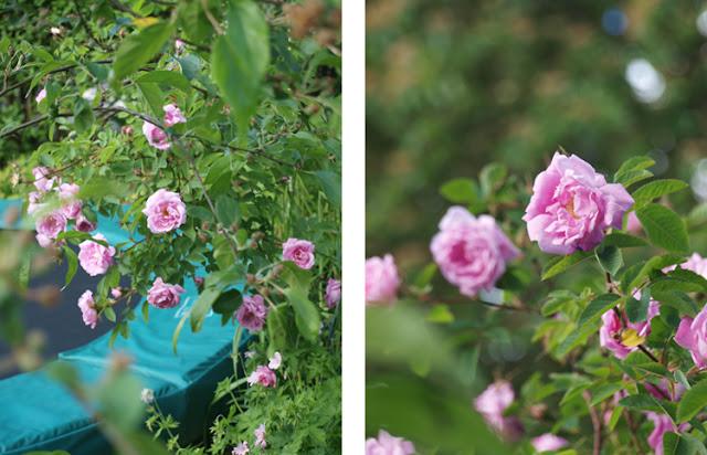 Placer tranpolin i haven således at der både er plads til leg og planter