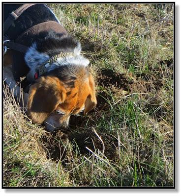 wenn Hund ein Loch buddelt