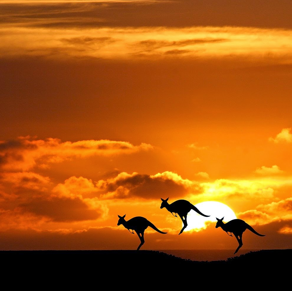 Australia Kangaroo | Australia the perfect land photography lovers