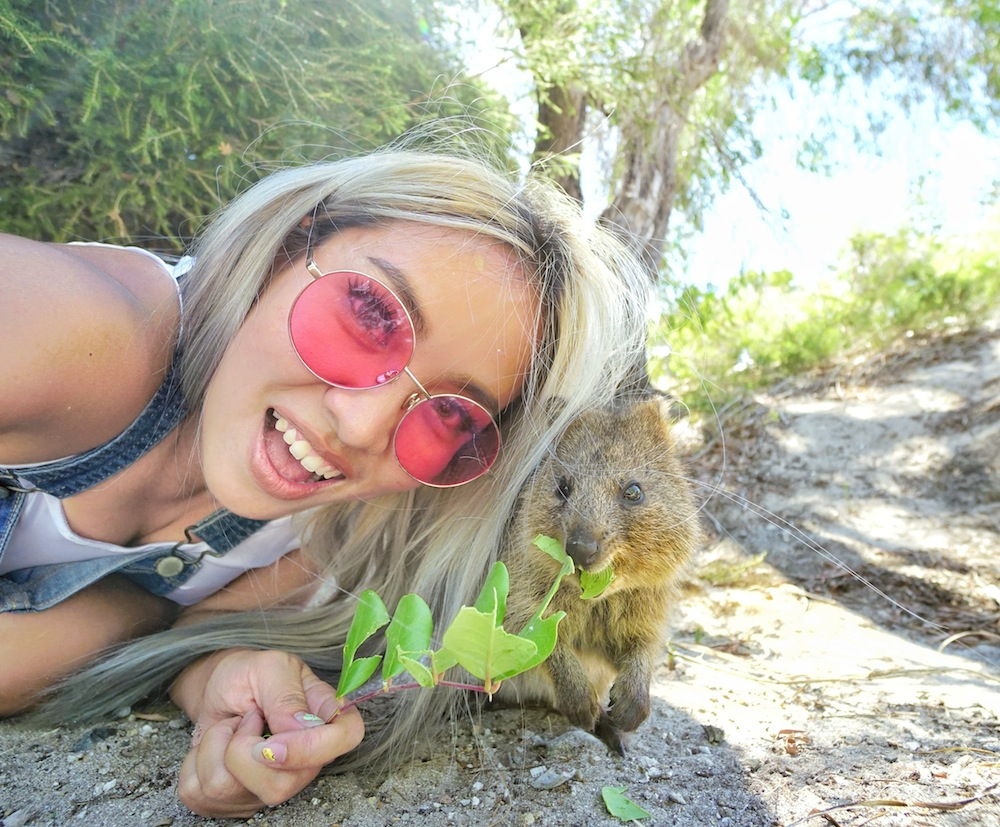"""<a href=""""http://mataram.info/things-to-do-in-bali/visitindonesia-banda-marine-life-the-paradise-of-diving-topographic-point-inward-fundamental-maluku/"""">Indonesia</a>best destinations : Selfie Amongst The Happiest Brute On The Planet: Quokka Rottnest Island"""