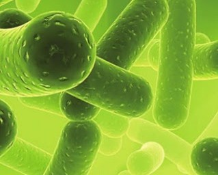 Pengertian Virus: Apa itu Virus?