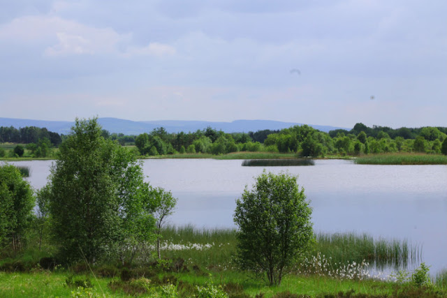 View of Lake at Lough Boora