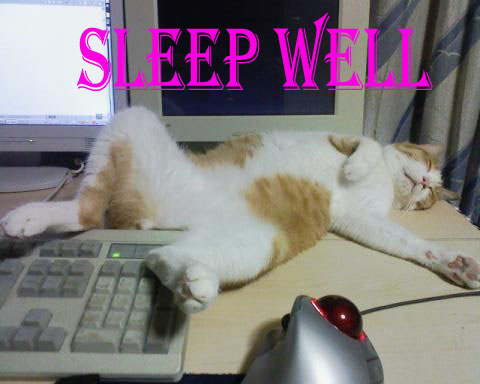 Good Night Sleep Wall, Funny Cat Image