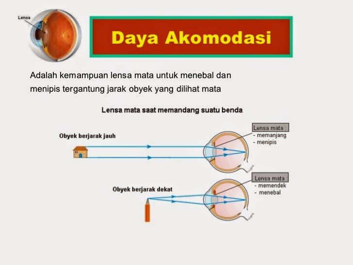 Fungsi Lensa Mata pada Proses Akomodasi