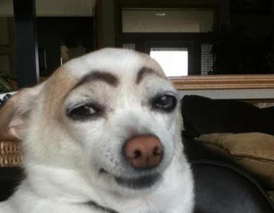 chien maquillé