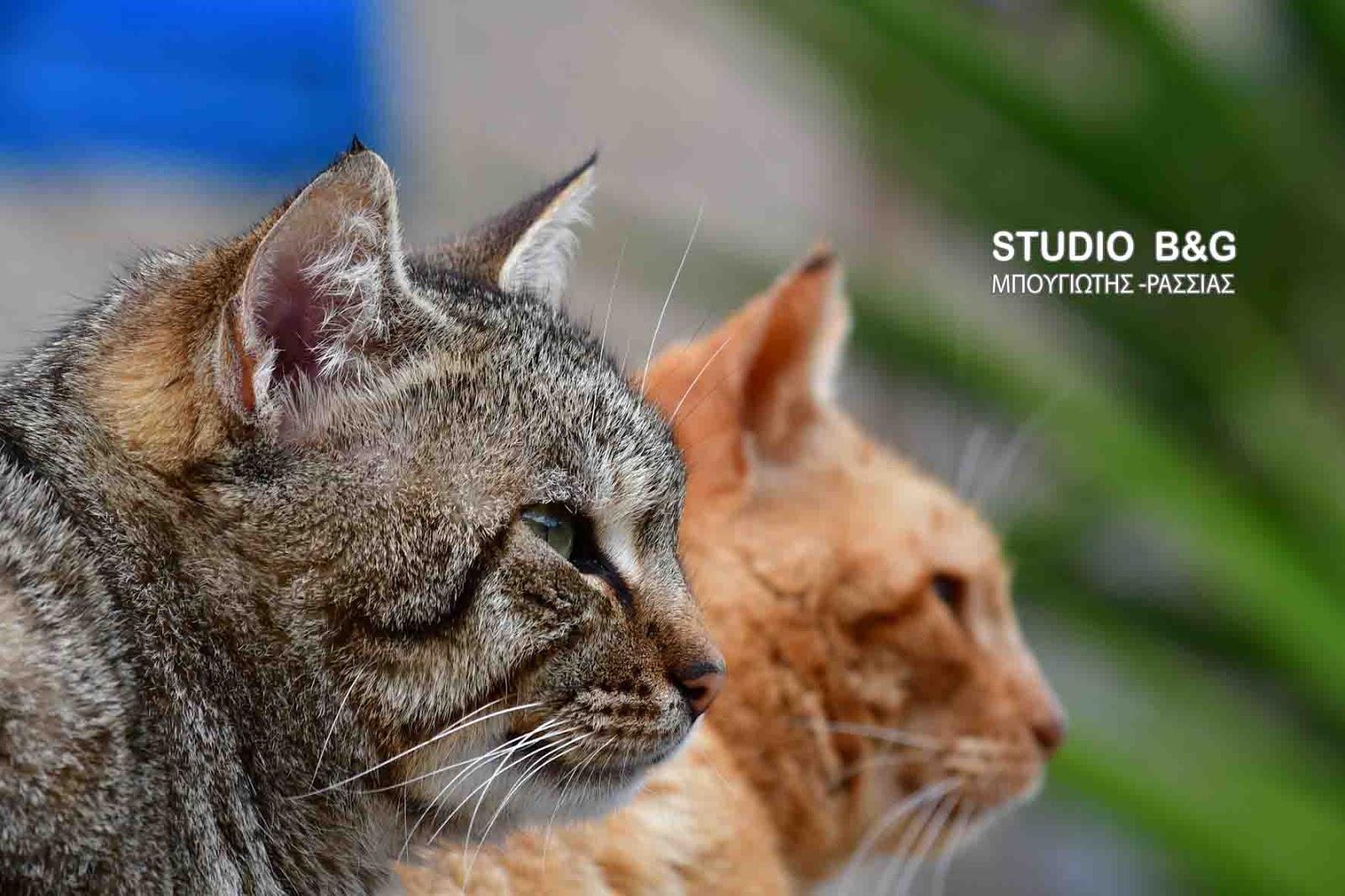 7efecf8817e6 Η φωτογραφία της ημέρας  Η Γάτα του Αιγαίου - Αργολικές Ειδήσεις