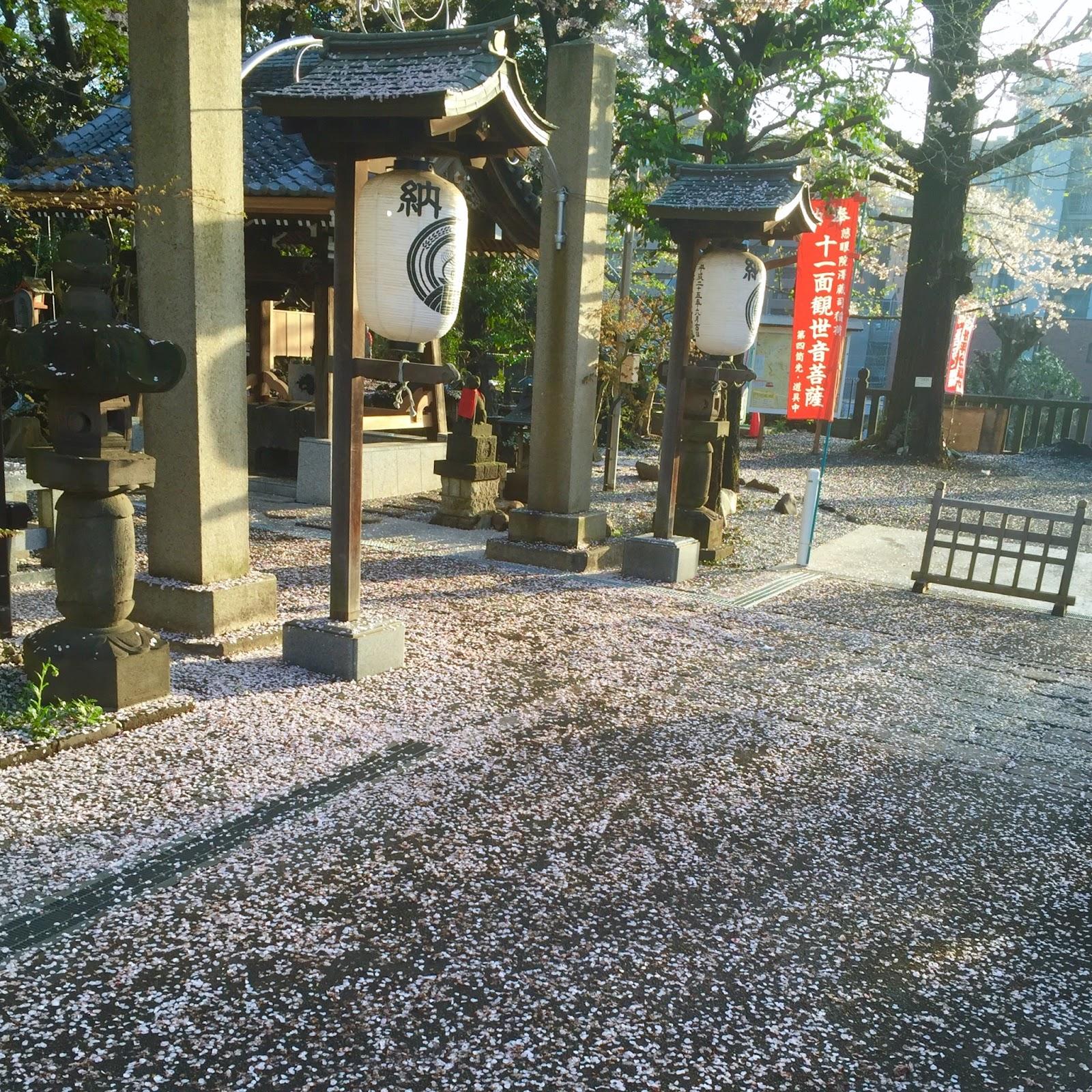 Photo: Sakura 2016 | Tokyo | 2016-02