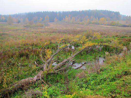 Podmokłe łąki na stoku Kiczery.