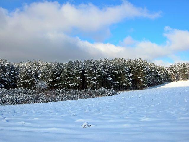zimowe pola, lasy, mróz, zima