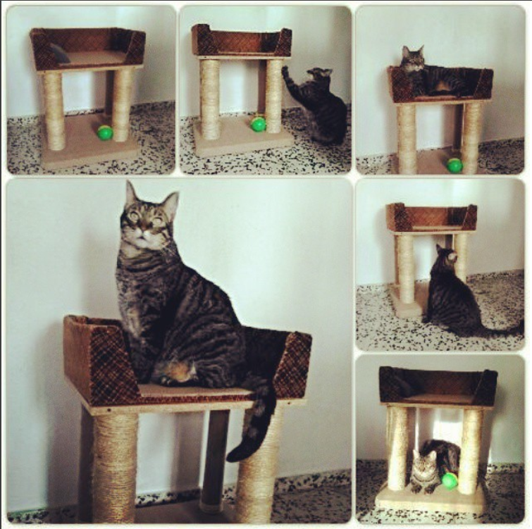 C mo hacer rascadores caseros para gatos mascotas - Estanterias para gatos ...