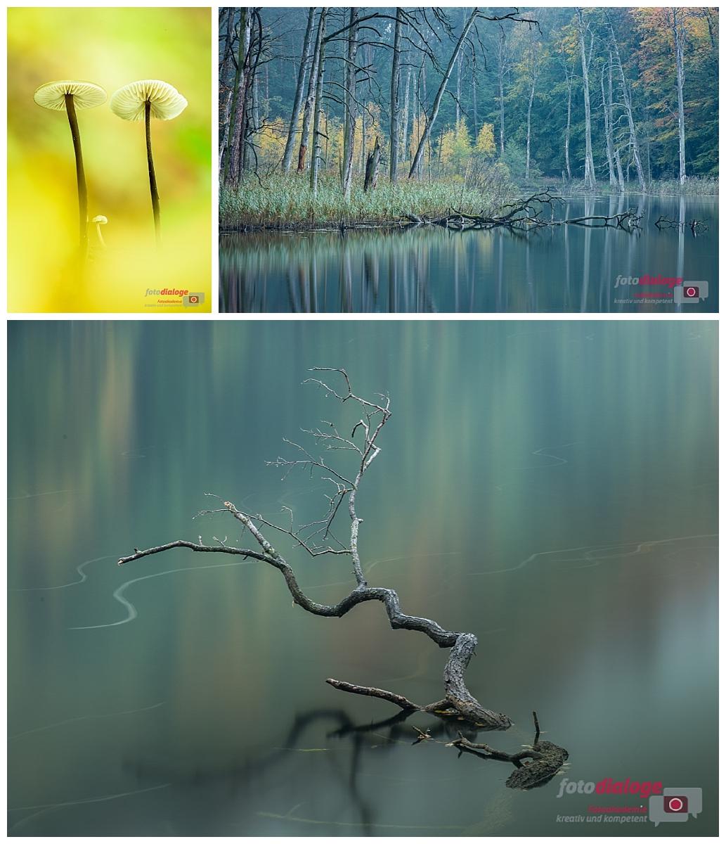 Workshop mit der Fotoschule Fotodialoge im Nationalpark Müritz und der Feldberger Seenplatte