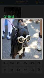 по улице на поводке собака в очках круглых белого цвета