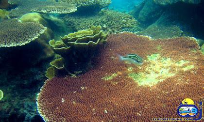 keindahan bawah laut dan paket wisata pulau seribu tidung