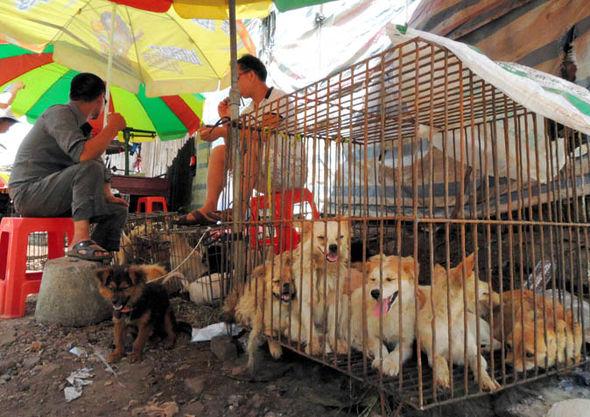 Festival Makan Anjing Yang Terletak Di Yulin China Mendapat Banyak Kecaman Dari Berbagai Pihak