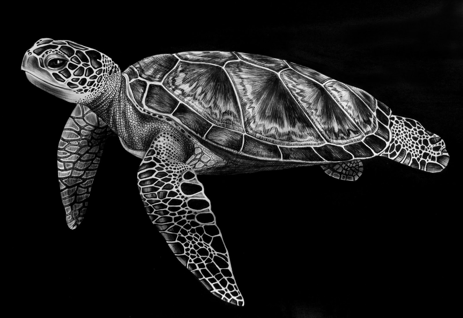 Turtles Animal Scratchboard