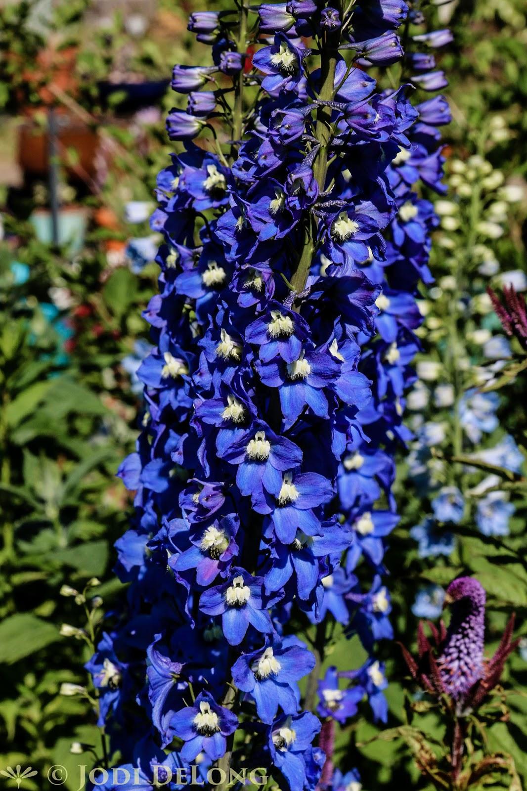 Bloomingwriter Gardening In Nova Scotia