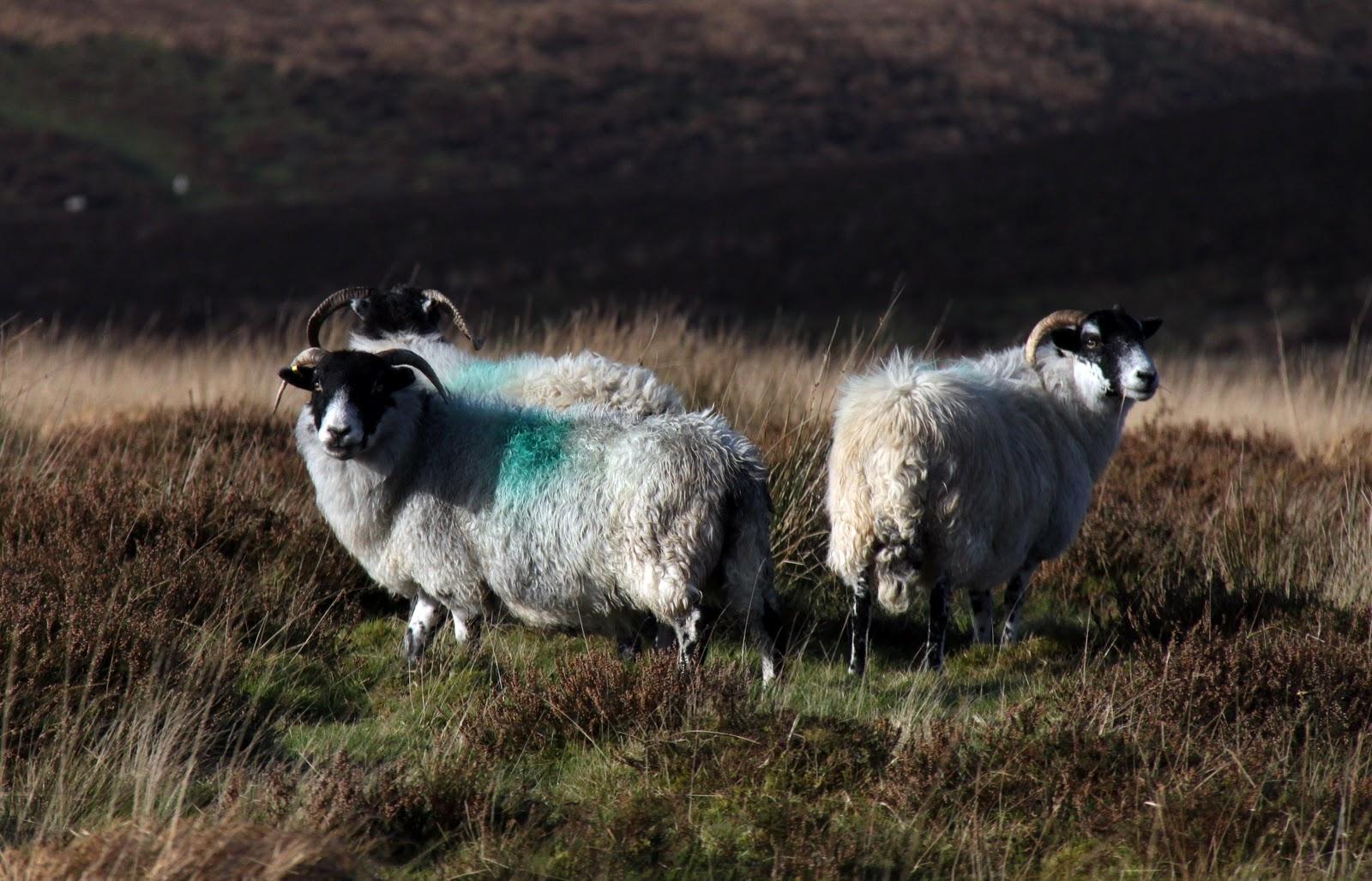 Wildlife Wanderings Exmoor North Devon