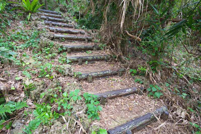 hill, forest, steps, logs, Horohoro, Okinawa