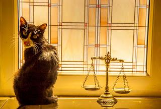 gatto-con-bilancia-giustizia