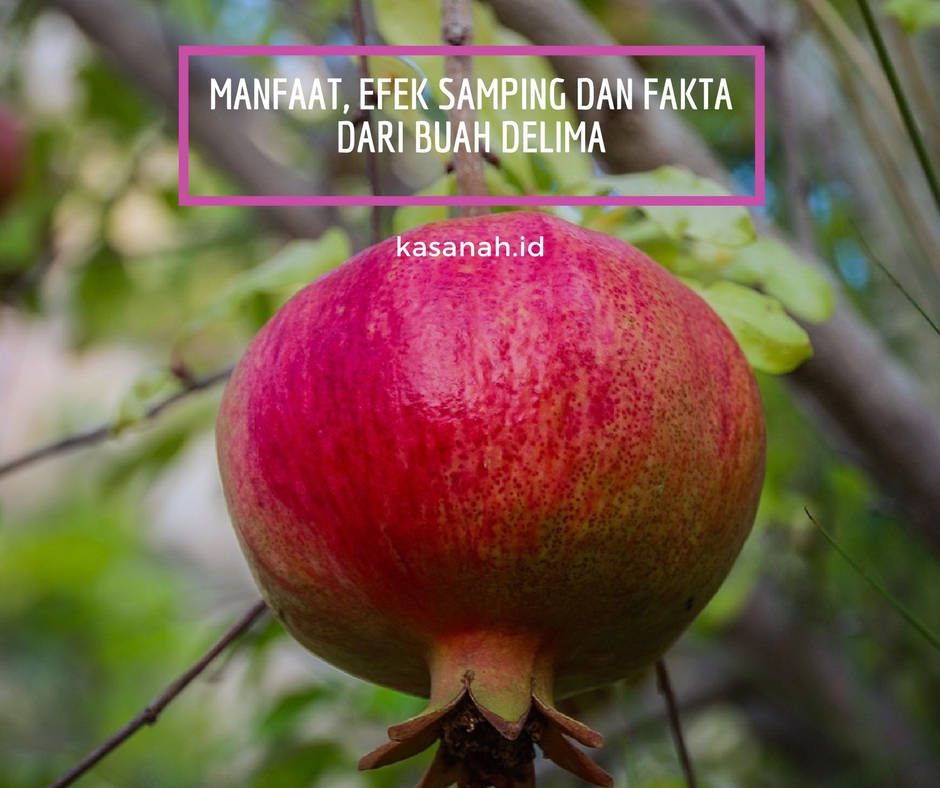 Manfaat, efek samping dan fakta dari buah delima