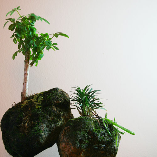 The Rainforest Garden Make Your Own Miniature Mountaintop
