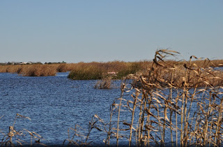 open water, cord grass and reeds in a salt marsh on a clear day