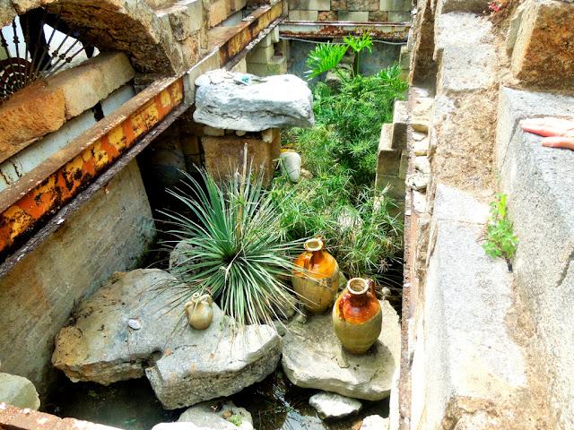 sassi,anfore,piante,composizione
