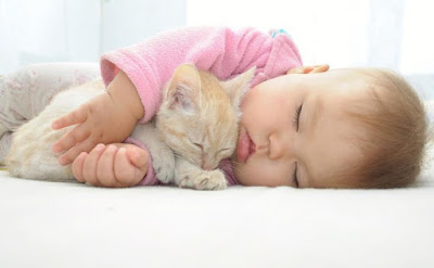 Democrats fight for kittens' right to life after voting to kill born-alive babies