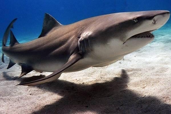 Tubarões podem derrubar a internet