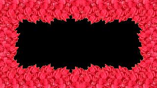 12 Moldura flor vermelha 1 fotos