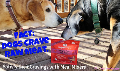 FACT 1: Dogs Crave Raw Meat. FACT 2: Stella & Chewy's Meal Mixers make raw feeding easy and convenient! #dogfood #rawdogfood #Chewy #ChewyInfluencer #LapdogCreations ©LapdogCreations