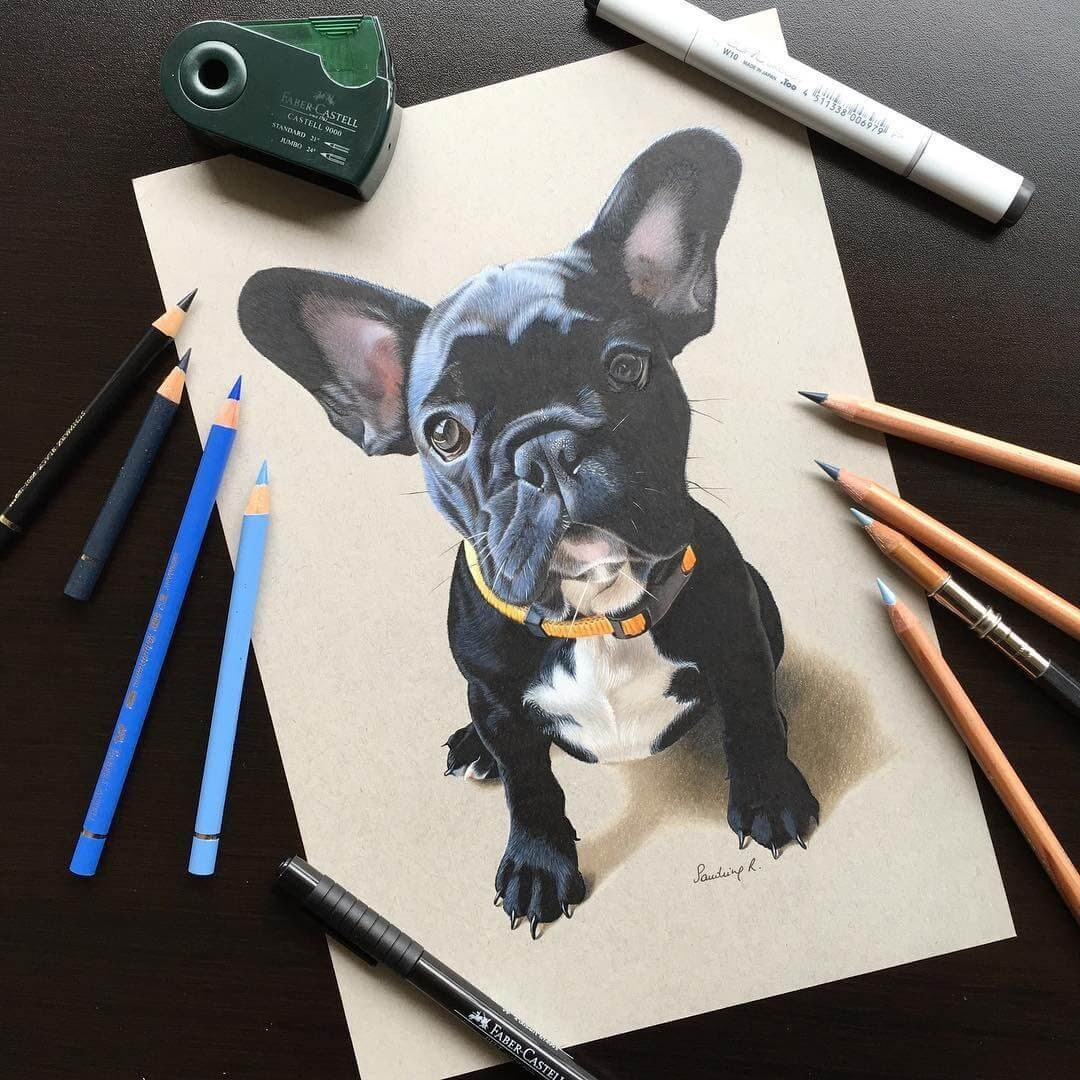12-French-Bulldog-Frenchie-Sandrine-R-Sweet-Realistic-Animal-Portrait-Drawings-www-designstack-co