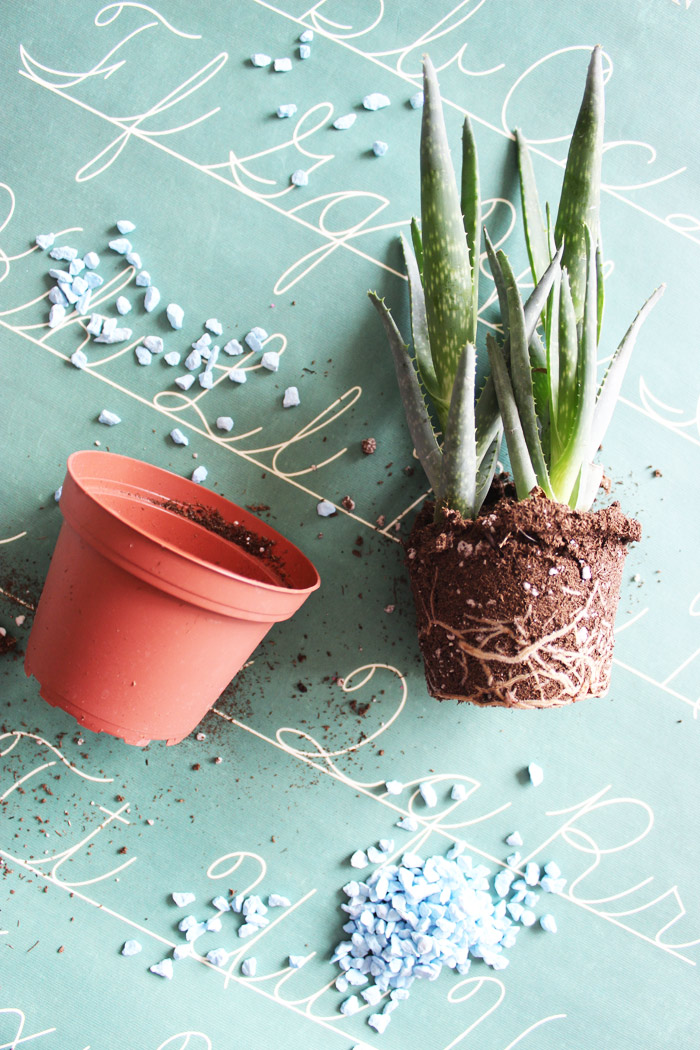 Diy Rock Planter Ikea Hack Poppytalk