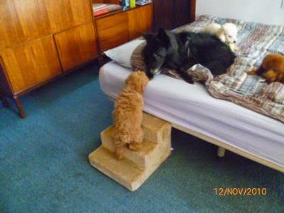escadas para cachorros