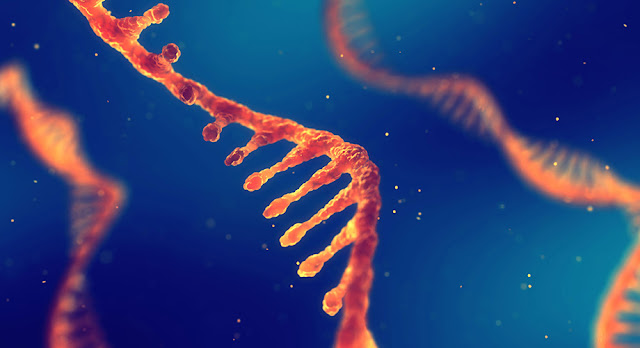 Building blocks of DNA and RNA could have appeared together before life began on Earth