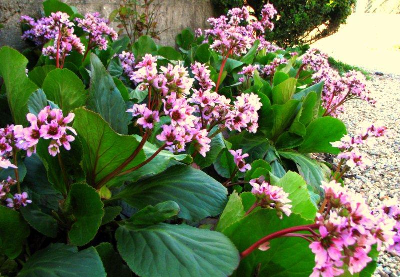 Lorto dei colori: fiori rustici da bordo strada